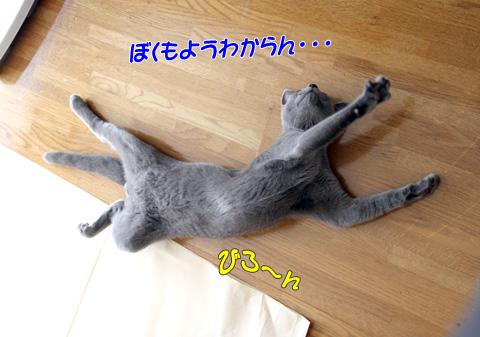 miu2010n184.jpg