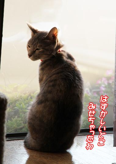 miu2010n224.jpg