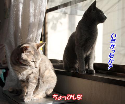 miu2010n271.jpg