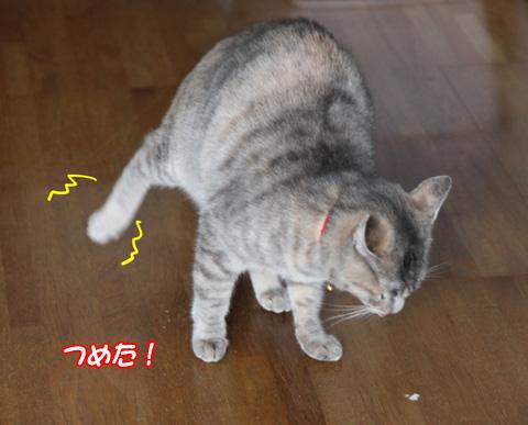 miu2011f032.jpg