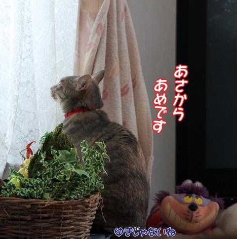 miu2011f101.jpg