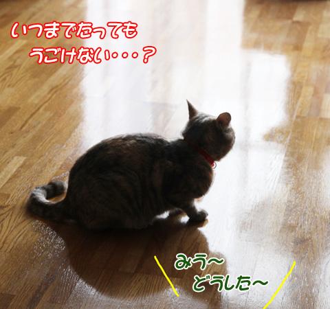 miu2011f113.jpg