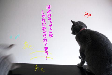 miu2011f1841.jpg