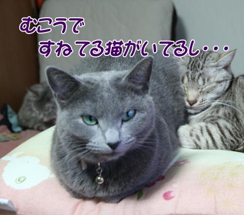 miu2011f263.jpg