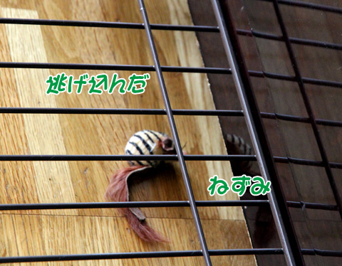 miu2011j122.jpg