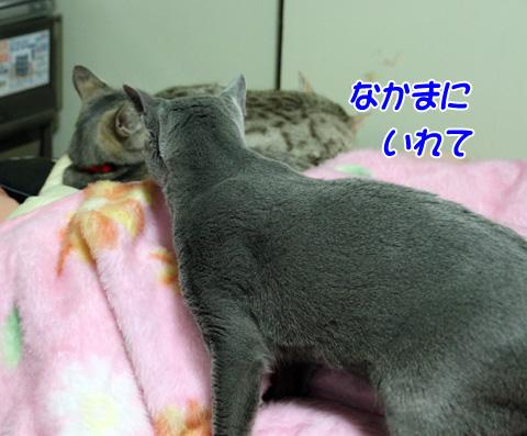 miu2011j171.jpg