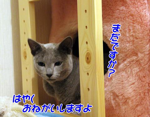 miu2011j222.jpg