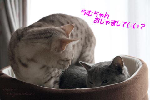 miu2011m021.jpg