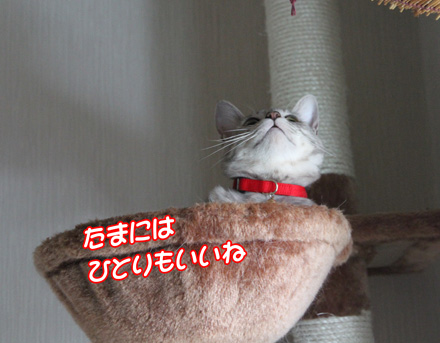 miu707061.jpg