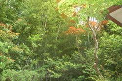 穂高、柳生の庄、強羅花壇他 158