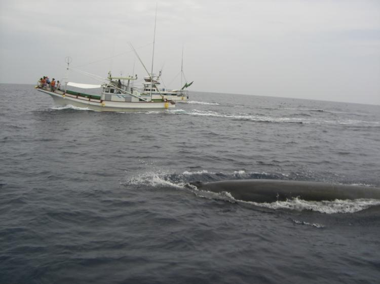 CIMG0466_convert_20080819091248クジラ