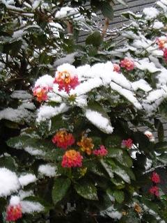 今朝の雪~♪