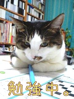 あたしも勉強中