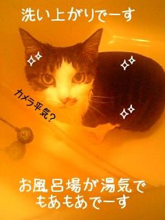 洗い上がり