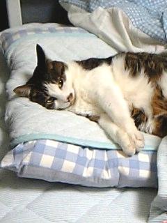 あたしの寝床