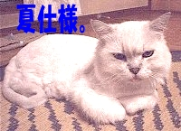 小次郎、夏仕様