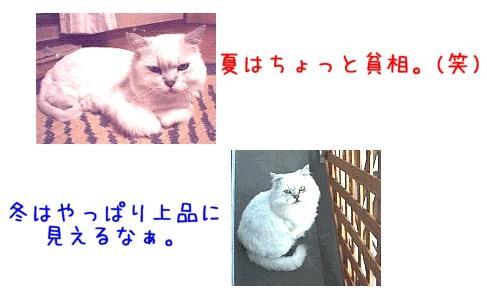 小次郎比べっこ