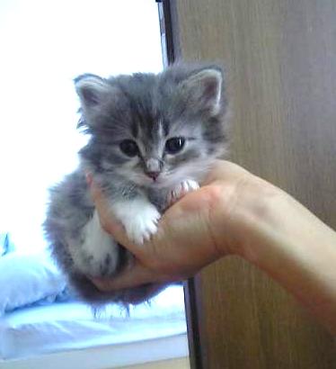 子猫その1