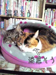 丸まりミー&おにいちゃん
