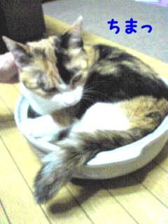 三毛猫なべ