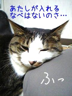 猫なべになれない