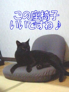 夜一お気に入りの座椅子
