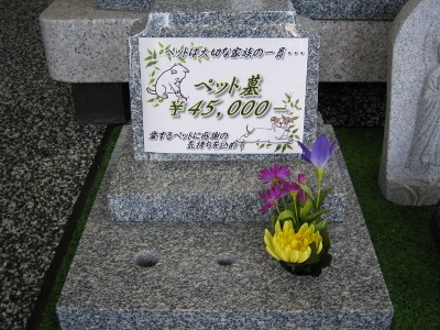 019 (400x300)