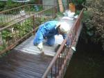 水屋敷の橋 塗装作業
