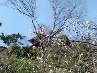 2.26 27横浜・鎌倉巡り 009