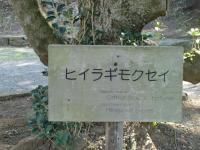 2.26 27横浜・鎌倉巡り 013