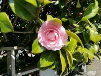 2011.2.26・27 横浜・鎌倉巡り1(洋館巡り) 049