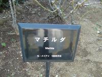 2011.2.26・27 横浜・鎌倉巡り1(洋館巡り) 107