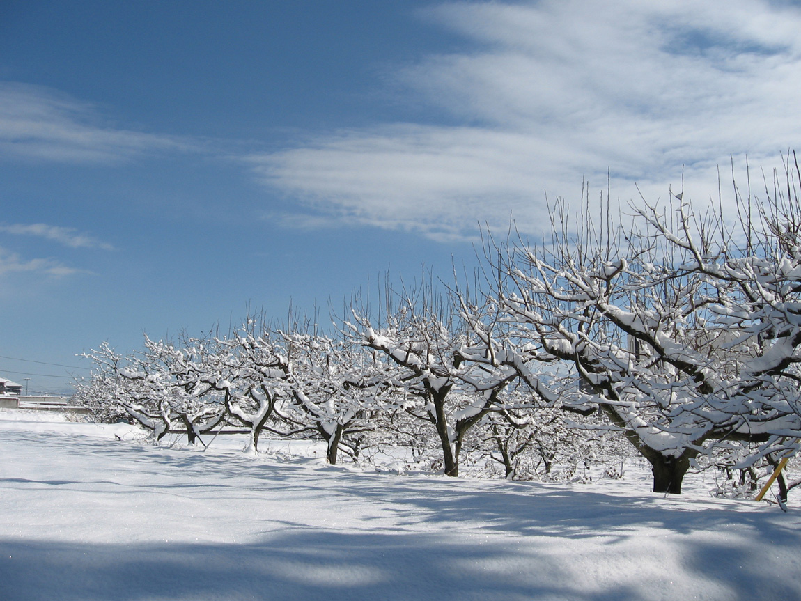 雪の果樹園