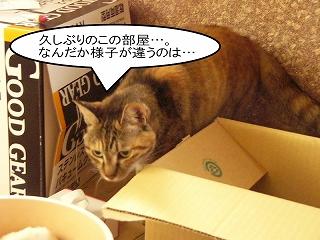 nekotubuyaki1.jpg