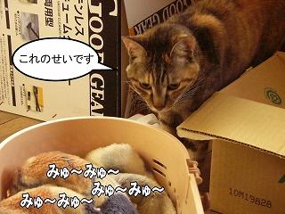 nekotubuyaki2.jpg
