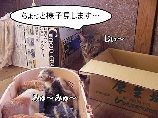 nekotubuyaki3.jpg