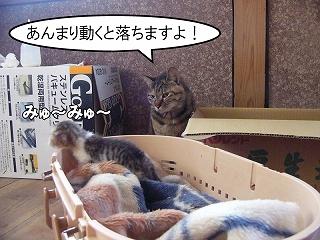 nekotubuyaki4.jpg