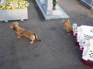 2009.09.23お墓参り1