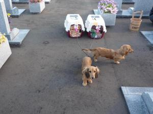 2008.09.23お墓参り2