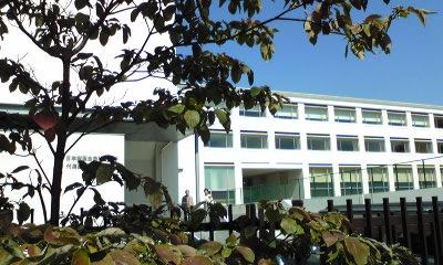 猫の大学病院