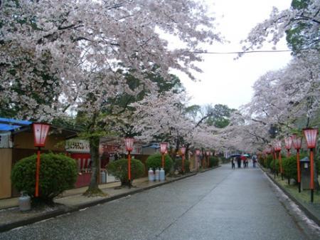 津山鶴山公園3桜