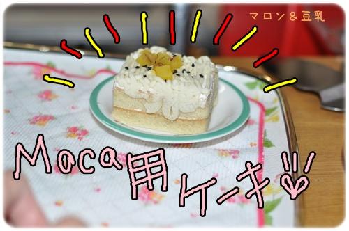 DSC_0099_20110101151252.jpg