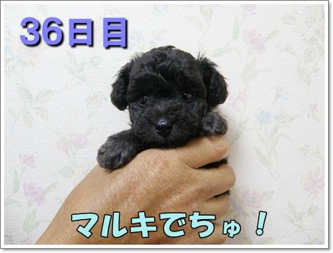 PA150095.jpg