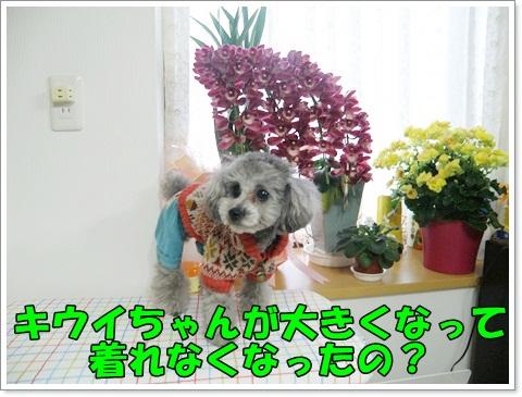 PC270251.jpg