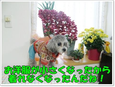 PC270252.jpg