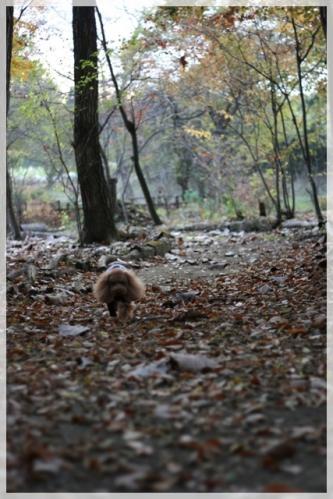 林の散歩道