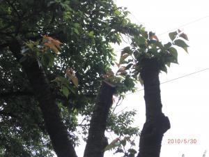004_convert_20100602112404.jpg