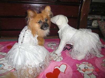 花嫁さんみたい?