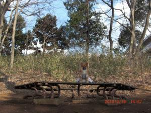 020_convert_20100319171426.jpg