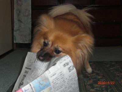 はい、新聞!